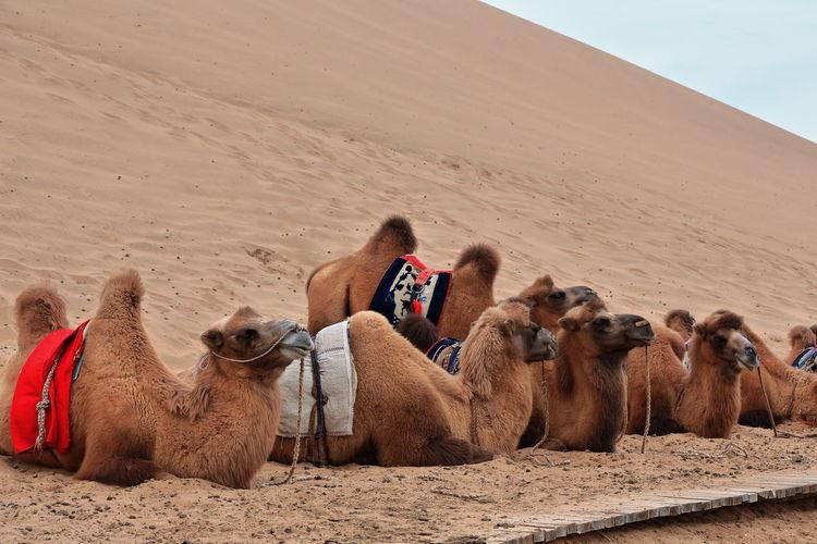 People relaxing in a desert