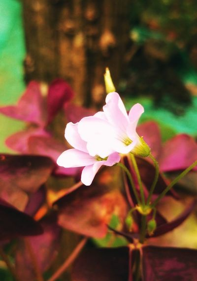 idukki flower