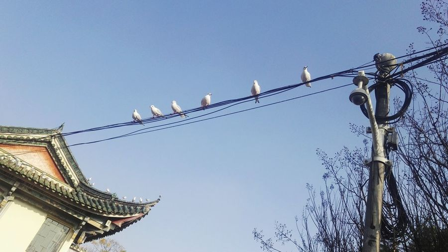 Gulls Day No People Bird Sky Animal Themes Outdoors Low Angle View