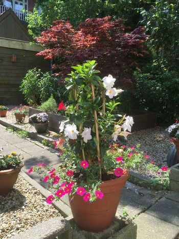 My colourful garden gives me lots of pleasure and time to think