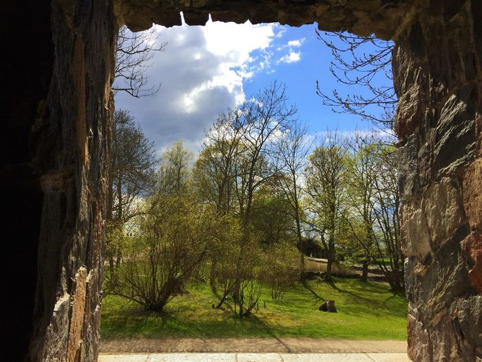 Tree Bare Tree Nature Branch Sunlight No People Tranquility Day Beauty In Nature Sky Growth Outdoors Tree Trunk Landscape Old Fortress Soumenlinna Travel Photography EyeEmNewHere Nice view from a fortress window🙂