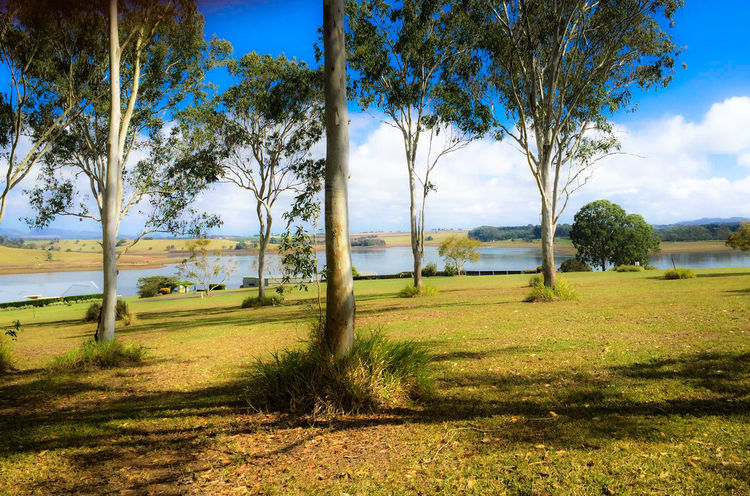 Gum Trees Tranquil Scene Lake Nature Solitude Beauty In Nature Check This Out Beautiful Blue Sky☁