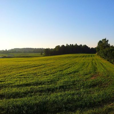 Norway Norge Akershus Follo  ig_norway i_love_norway ilovenorway ilovenorway_akershus farming cultivating sunshine solskinn summer sommer sunshine solskinn field jorde