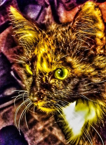 Calico kali special effects close up on a cat that hates cameras Animal Themes One Animal Mammal Domestic Animals Pets Close-up Domestic Cat No People Indoors  Yellow Eyes Cat Collection Calico Cats Are Special Cat Photography Calico Cat Adopt To Save A Life Special Effects Donation = Sharing