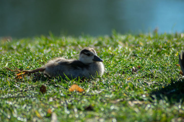 Animal Themes One Animal Animal Animal Wildlife Grass Animals In The Wild Vertebrate Plant Nature Selective Focus No People Green Color Day Bird Mammal Land Young Animal Field Young Bird Outdoors My Best Photo