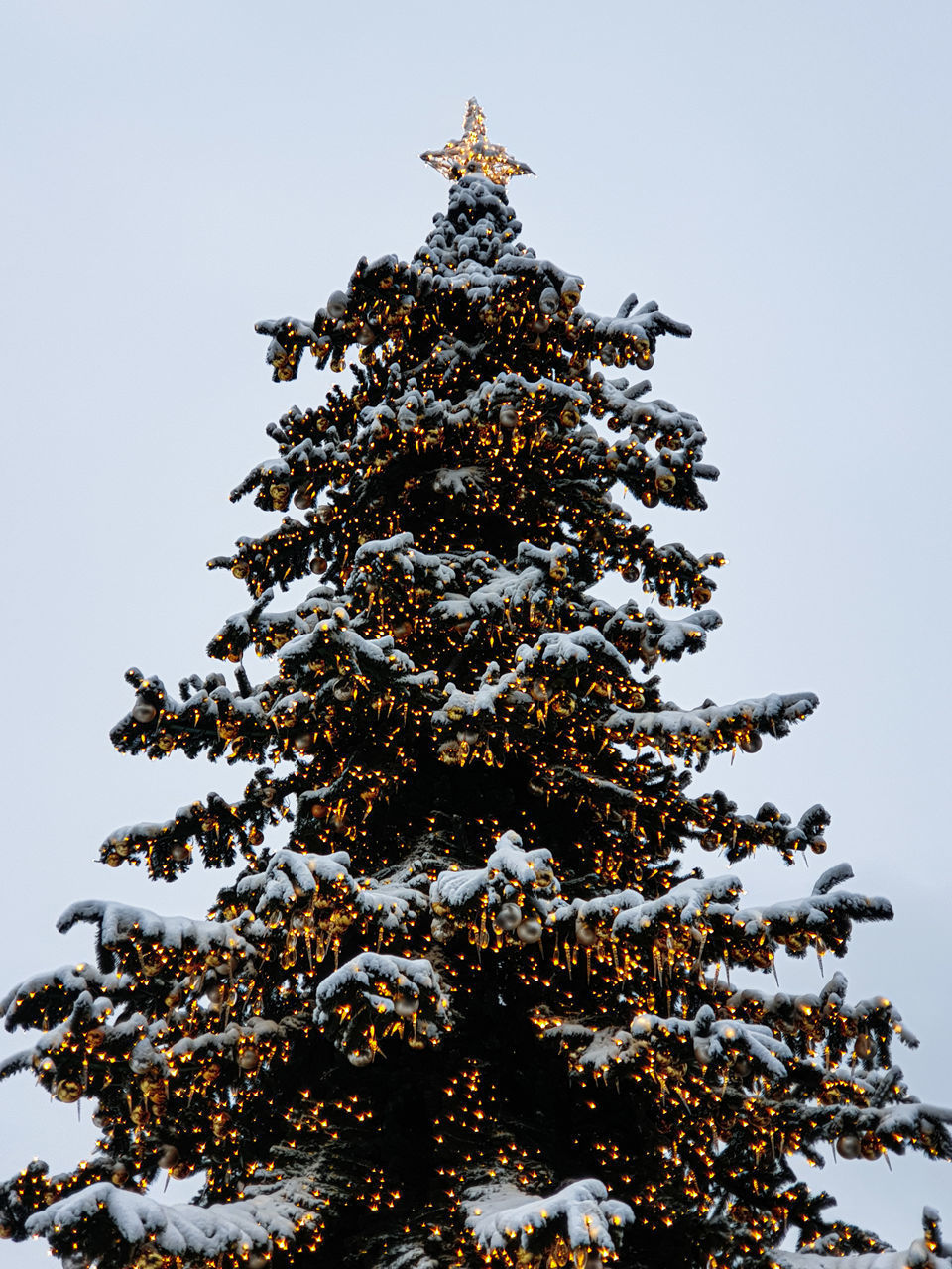 LOW ANGLE VIEW OF CHRISTMAS TREE AGAINST SKY
