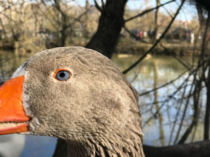 EyeEm Best Shots Animals In The Wild Italy Perugia Duck EyeEm Nature Lover Eye Animal Eye Blue Bird One Animal Close-up Nature Outdoors No People Day Animals In The Wild Moments