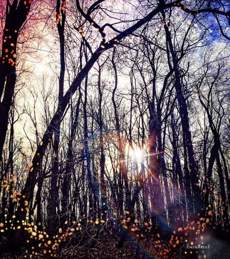 "Showcase: December ""Fairy-ville"" Father Sky Poetic Imagery EyeEm Nature Lover Patterns In Nature Tree_magic The Woods December Sparkle Changing Seasons"