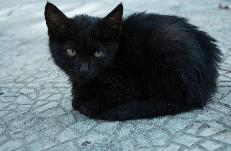Beautiful Black Kitten Black Cats Black Cat Is Just So Beautiful. Kitten 🐱 One Animal Black Color Animal Themes Talking Eyes