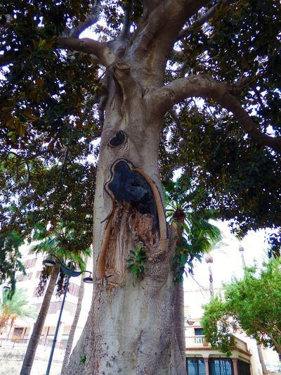 tree in Almería
