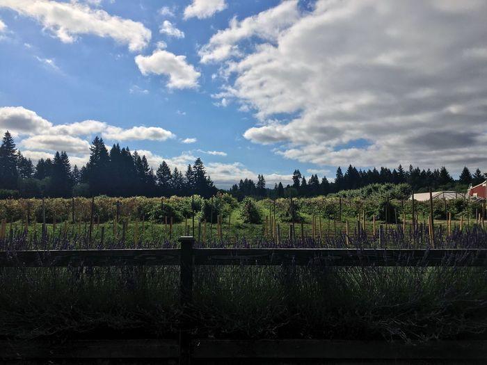 Berries Oregon