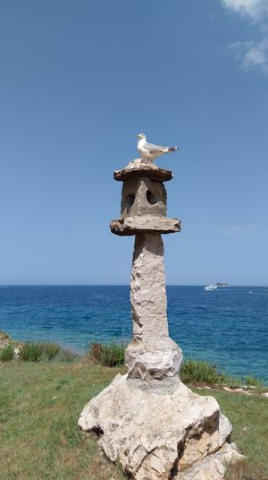 Rovinj Croatia Crveniotok Water Sea Beach Clear Sky Statue Sculpture Blue Owl Sky Horizon Over Water Seagull Sea Bird Bird Water Bird
