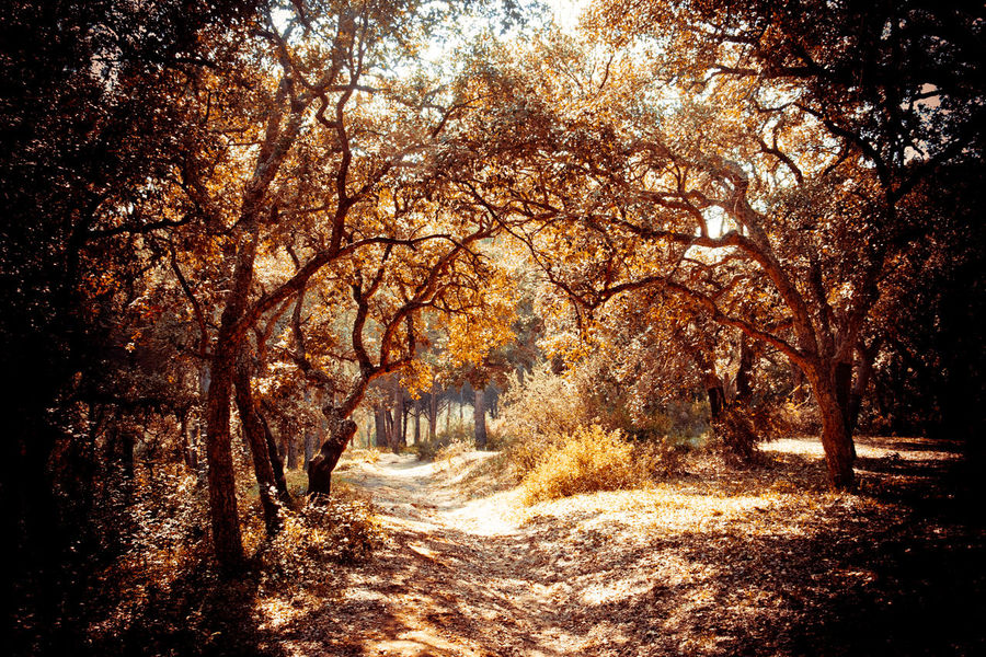 hidden girl Autumn Beauty In Nature Change Day Dirt Road Empty Road Footpath Growth Nature No People Non-urban Scene Orange Color Outdoors Scenics Season  The Way Forward Tranquil Scene Tranquility Tree Vanishing Point WoodLand