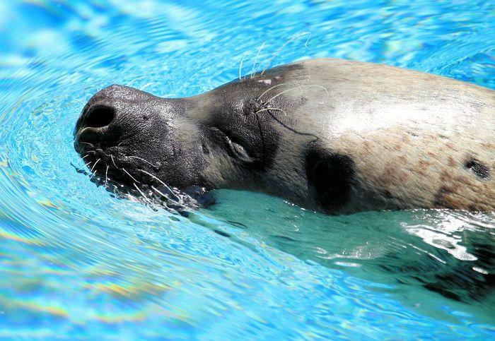Learn & Shoot: Simplicity Zoo Milwaukee Sea Lion Eyem Best Shots