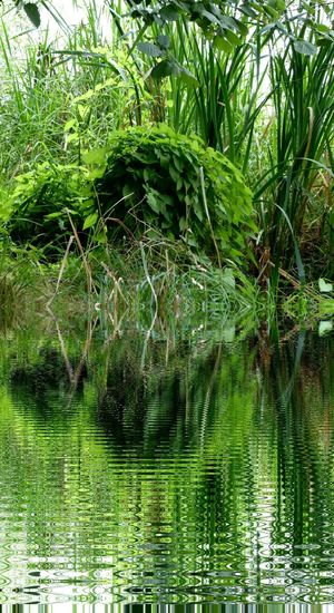Reflection Green Color Beauty In Nature Tranquil Scene Editoftheday Playing With Edits Favorite Places