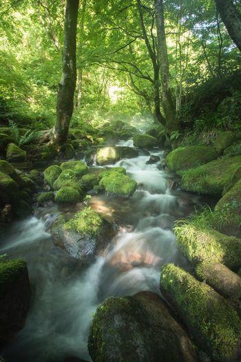 otito39 木谷沢渓流 大山 鳥取県 Japan 日本 Forest Water Long Exposure Nature