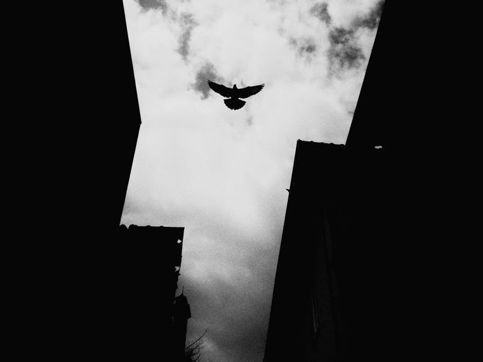 Low angle view of silhouette bird flying over buildings