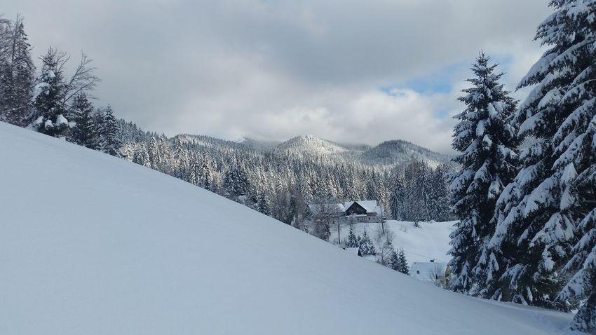 EyeEm Selects Snow Mountain Winter Cold Temperature Snowcapped Mountain Mountain Range Pinaceae