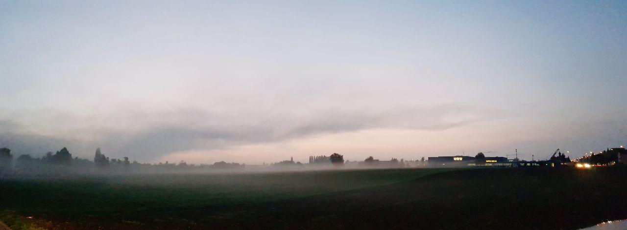 Tree Dawn Fog