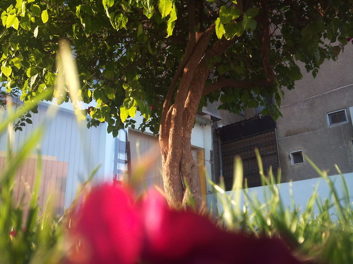 Architecture Building Building Exterior Built Structure Day Flower Flowering Plant Front Or Back Yard Growth House Leaf Nature No People Outdoors Plant Plant Part Selective Focus Tree
