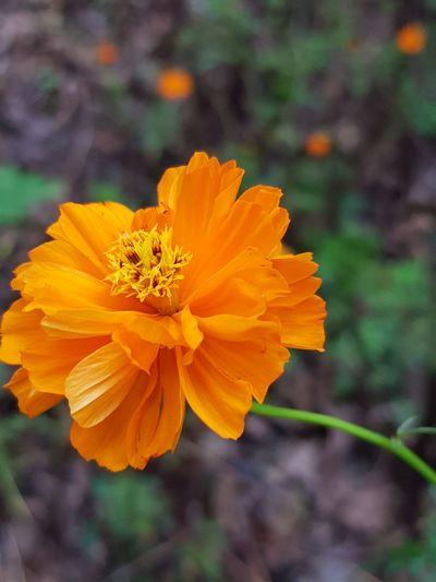 Flower Petal Plant Nature Freshness Blossom Botany Close-up Growth