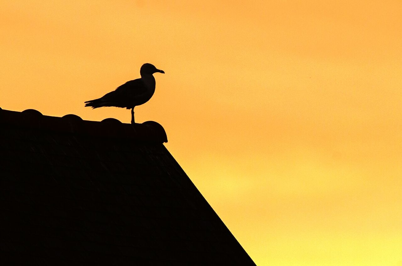 LOW ANGLE VIEW OF BIRD PERCHING ON SILHOUETTE AGAINST SKY