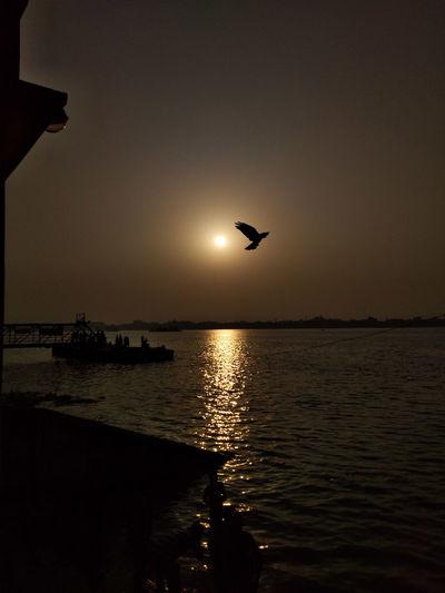 Silhouette bird flying over sea against sky
