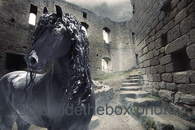 Reflection Horselover HorseLoversClub Getting Creative Love Beautiful Horse Friesian Horses Friesian Black Stallion Horses Horselovers Creativity Black Horse Friesian Horse Magical Magic Forest Capturing Freedom Creative Horselove Black Horses France Horse Ruins Castle