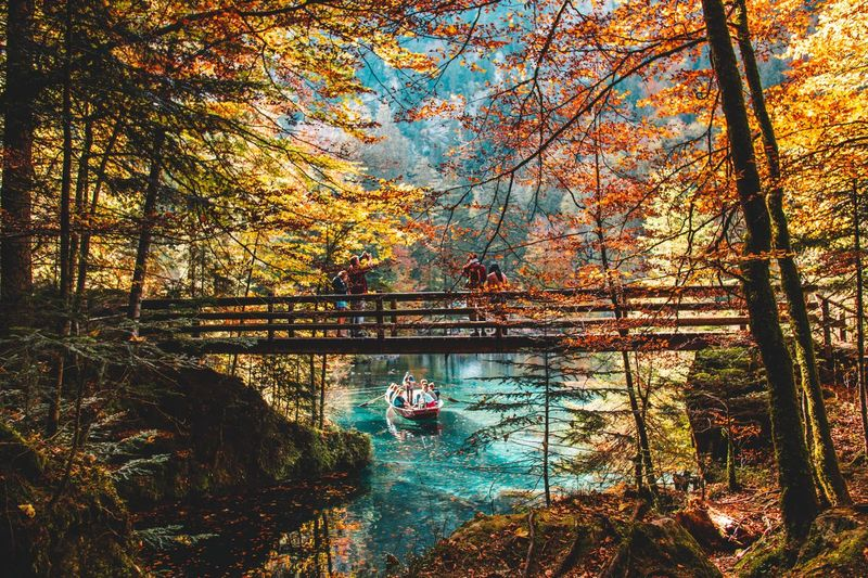 Lugar mágico Tree Water Plant Nature Beauty In Nature No People Reflection Tranquility Lake Sky Change Branch Transportation Autumn Day Outdoors Sunlight