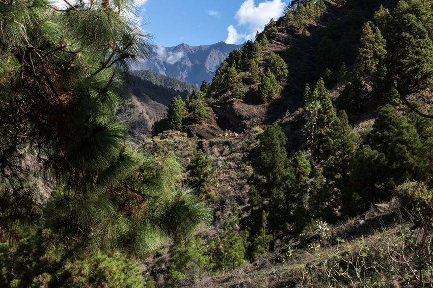 Barranco De Las Angustias Beauty In Nature La Palma Landscape Mountain Nature No People Outdoors Schlucht Der Todesängste Tree