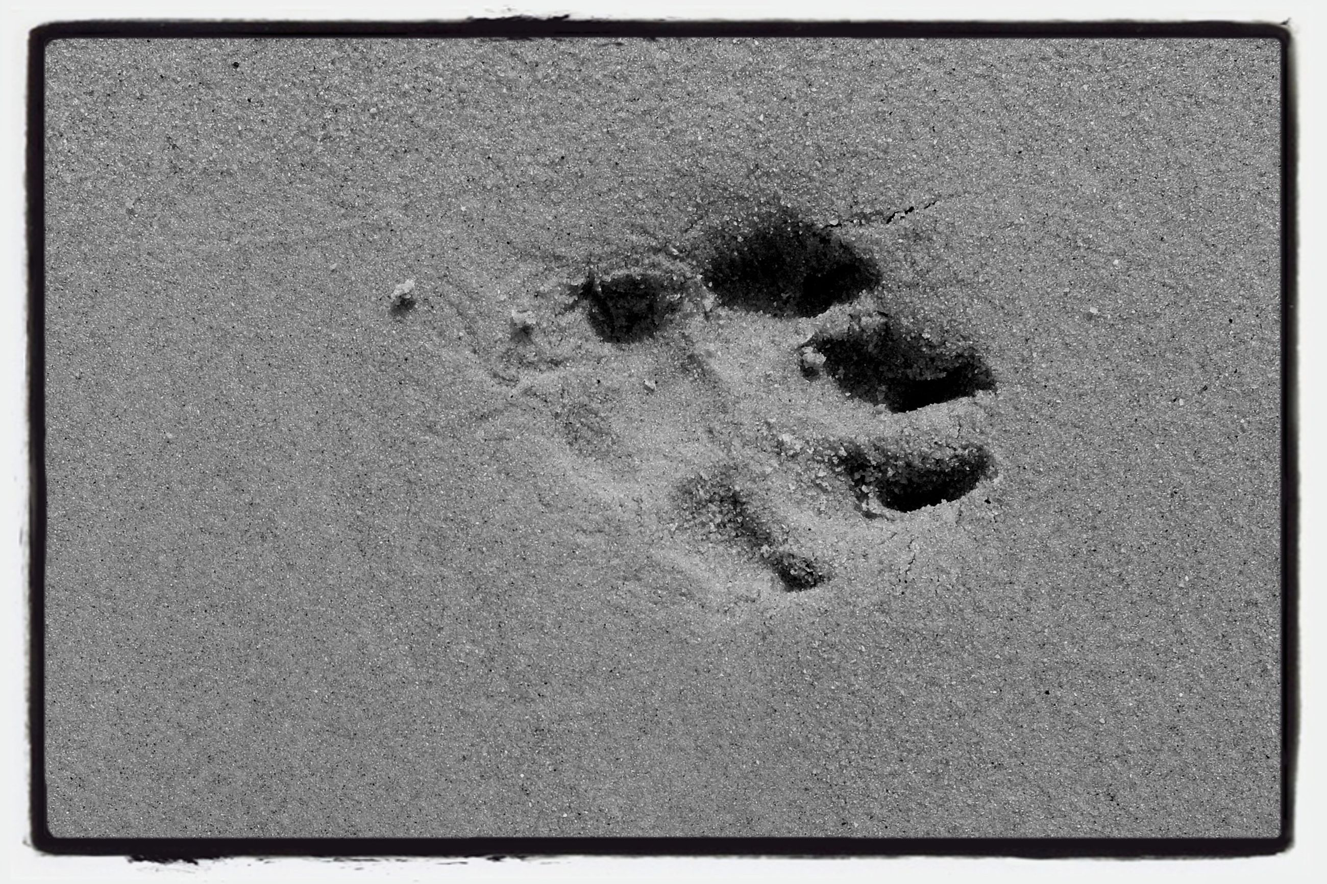 transfer print, high angle view, auto post production filter, textured, footprint, sand, asphalt, beach, full frame, close-up, no people, street, backgrounds, day, outdoors, rough, nature, ground, road, directly above