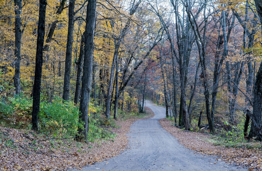 Tree Road Leaves Trees Fall Autumn Cold Temperature Wisconsin Dirt Road Rural