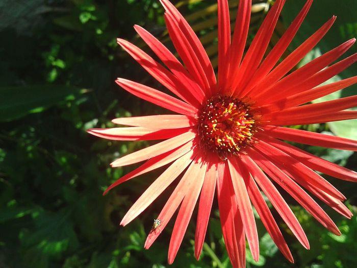 Red RedFlower Redflowerpower Garden Nature Flowers Wild