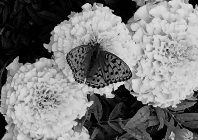 Papillon, fleur, butterfly, yellow, flowers, Fontainebleau, Nature Beauty In Nature Outdoors