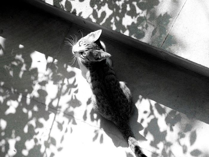 Animal Themes Pets No People Cat Shadow Shadows & Lights Shades Of Grey Shushannaagapi Shushannaagapiphoto Nature Leaves Blackandwhite Beauty In Nature Outdoors Petal Cute Cats EyeEmNewHere Welcome To Black Art Is Everywhere