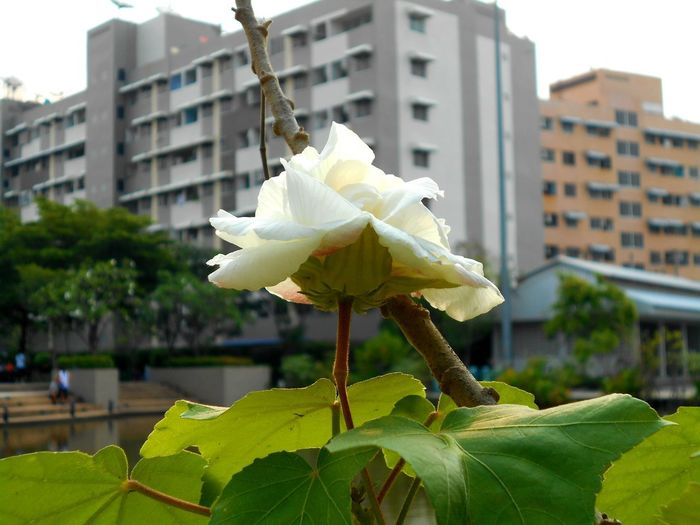 Architecture Beauty In Nature Built Structure Day Flower Flower Head Flowering Plant Fragility Freshness Leaf No People Outdoors Plant Plant Part Vulnerability