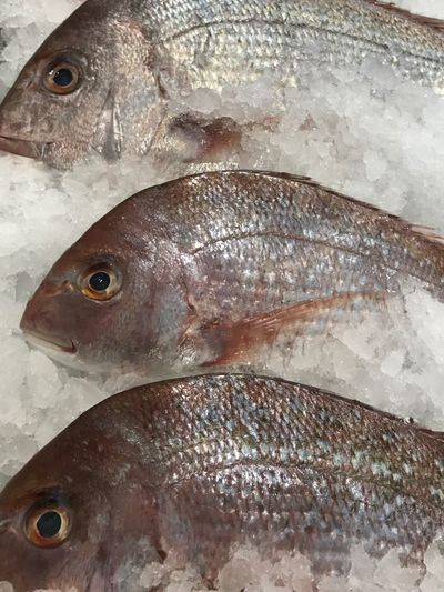 Close-up of fish on ice