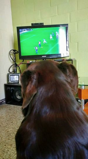 Football Fans ViscaBarca 🏆⚽🏆⚽ Layla