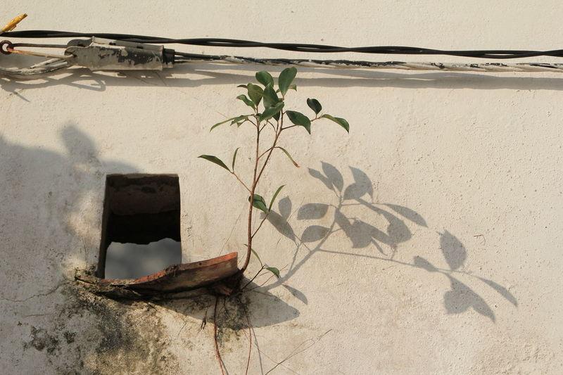 Corner Day House Leaf Macau Nature No People Outdoors Plant Shadow Taipa  Wall