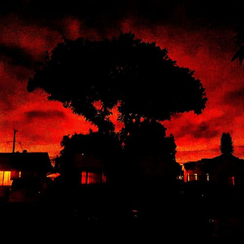 Capture The Moment I was leaving my home when I captured this moment across the street. It was the SunsLight reaching out from behind the Shadows of the Night before it Sinks down into the Horizon . Allowing this Tree and the surrounding Homes to Captivate me before leaving was exactly what I needed. Fire Light Darkness