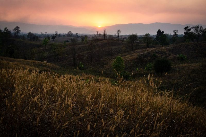 Landscape Scenics - Nature Sky Plant Sunset Environment Tree Nature Field Land Grass Beauty In Nature