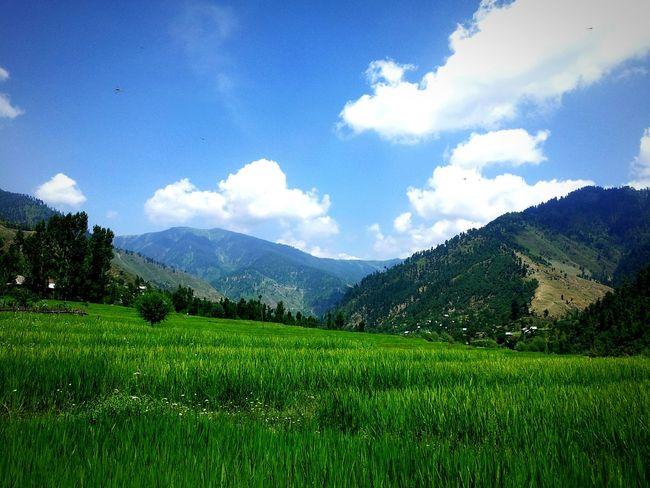 Lolab Lolab Valley Kupwara Handwara Kashmir Mountains Green Fields Summer ☀ Blue Sky White Clouds Sopore