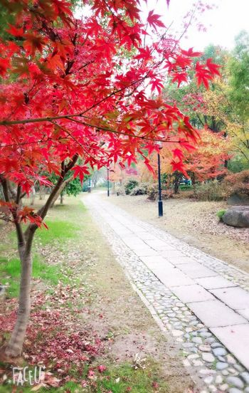 View of red flowering trees during autumn