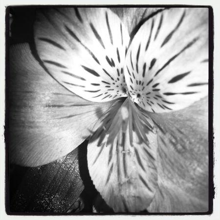 April flowers 7 KimberlyJTilley
