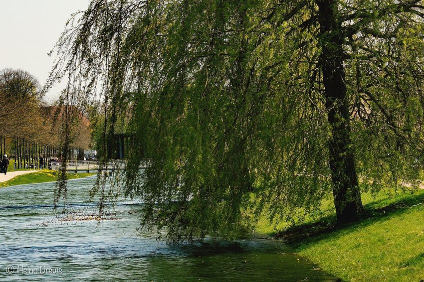 Water Tree River Nature Outdoors Flood Day No People Tranquility Waterfront Beauty In Nature Willow Tree Scenics Branch Grass Sky Architecture