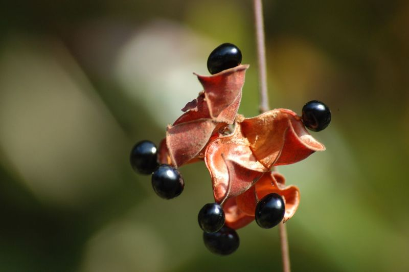 Close-up of red fruit on plant