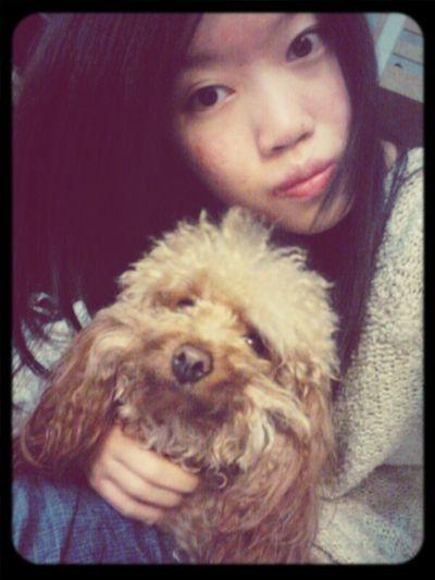 Choco so cute Dog HongKong Girl Cute Pretty Chok Poodle Lovely