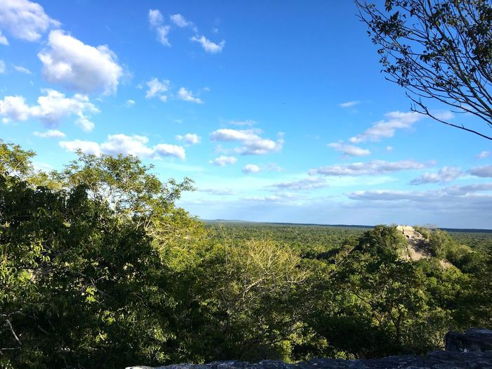 Calakmul biosphere reserve and archeological site. Calakmul Campeche Mayan Ruins Pyramid UNESCO World Heritage Site Archeological Site Calakmul Biosphere Reserve Landscape Scenics - Nature