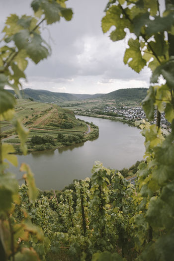 Mosel Water