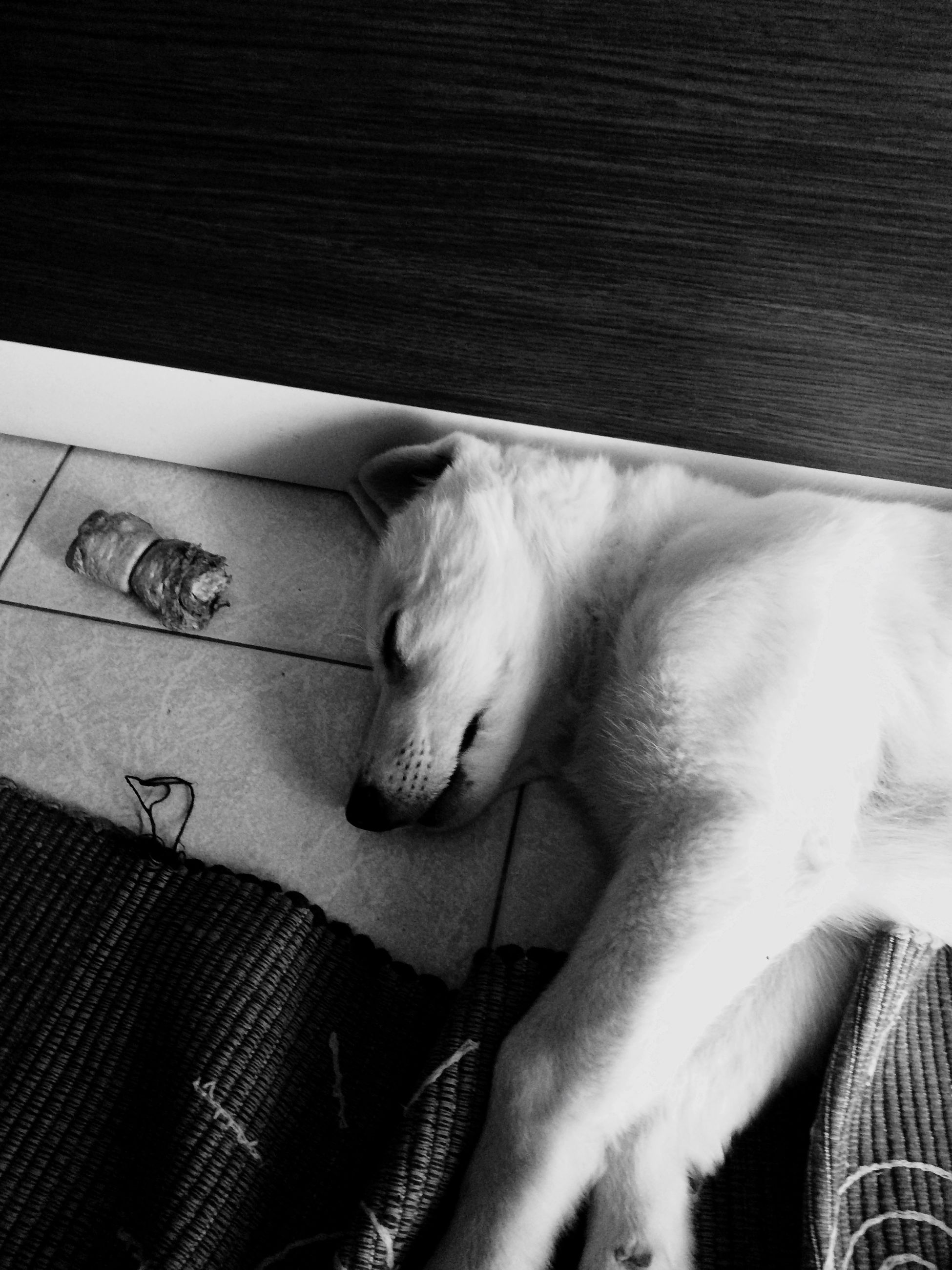 domestic animals, pets, one animal, mammal, animal themes, sleeping, indoors, relaxation, domestic cat, cat, resting, lying down, high angle view, feline, bed, eyes closed, dog, close-up, no people, comfortable